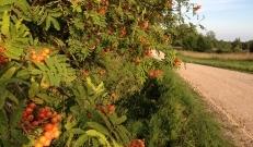 Nädala lõpuks hakkab madalrõhkkond taanduma ning sajuhoogude tõenäosus väheneb. Sooja on 18 kuni 23 kraadi.