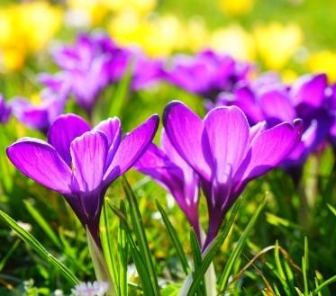Kevad tuleb sel aastal tavapärasest pisut varem ja selle lõpuosa võib kujuneda palavaks, ennustab ilmavaatleja.