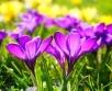 Kevad tuleb sel aastal tavapärasest pisut varem ja selle lõpuosa võib kujuneda palavaks,...