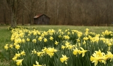 Järgmise nädala lõpus peaks saabuma Eestisse taas külmalaine, seni aga on võimalik nautida jätkuvat kaunist kevadilma.