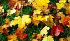 Järgmisel nädalal tuleb korraks meile külmem õhumass, kuid oktoobri esimesteks päevadeks võib taas vananaistesuvi naasta.
