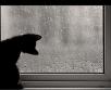 Esmaspäeval liiguvad üle Eesti järjekordsed sajupilved, kohati esineb ka udu.