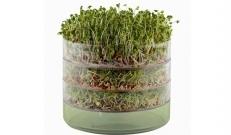 Kõik on kindlasti näinud toidupoodide lettidel pisikesi karpe idudega, kuid kas te teadsite, et idusid on tegelikult üsna lihtne ise kodus kasvatada?