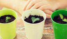 Päevad lähevad aina pikemaks ning aednikel juba näpud kindlasti sügelevad. Pika kasvuperioodiga taimed võib varsti juba mulda pista ning seega on viimane aega üle vaadata oma kodused ettekasvatusvahendid.