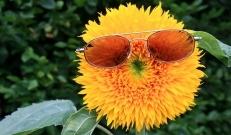 Tänane ilm rõõmustab päikesega, õhusooja tuleb 11 kuni 15 kraadi.