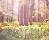 Üle Baltimaade ja Soome ulatub reedel kõrgrõhuvöönd, mis sajused ja tuulised...