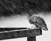 Esmaspäeval on pilves selgimistega ilm, mitmel pool sajab lörtsi ja vihma, kohati ka lund.