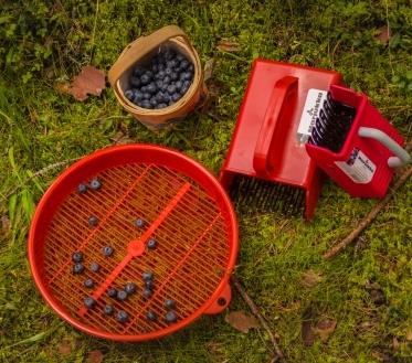 Kätte on jõudnud aeg, mil saame valmistada häid asju metsa- ja aiasaadustest