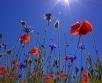 Puhub mõõdukas lõuna- ja edelatuul ning õhumass vahetub märksa soojema vastu....