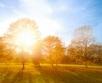 Käesolev nädal toob jätkuvalt sooje päevatemperatuure ning varasügisele kohaselt ka...