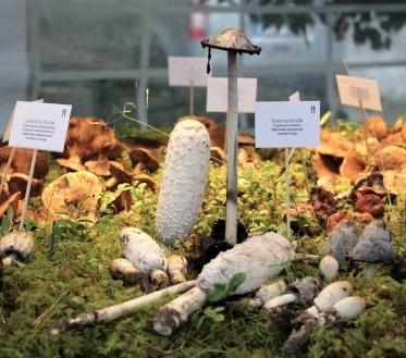 Täna, 14. septembril, avati Eesti Loodusmuuseumi sisehoovis suur seenenäitus, mis pakub ülevaadet tänavusest seeneaastast. Kümne päeva jooksul pakutakse ka rohkelt eriüritusi. Näitust saab vaadata 23. septembrini.