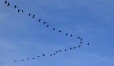 Ilma ülevaade 22.10.18 – 26.10.2018. Linnud on asunud teekonnale lõunasse, sest peagi on oodata esimesi öökülmasid.  Neljapäev võib tuua lumelörtsi.