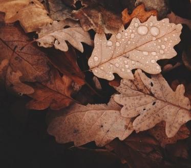 Ilma ülevaade 9.11.18 – 14.11.2018. Kuigi öökülmasid veel tulemas ei ole, hakkab sügis oma vihmasemat ja tuulisemat poolt näitama.