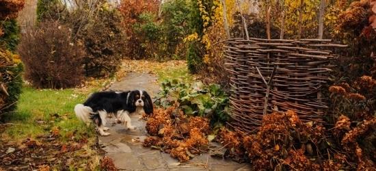Novembrikuised aiatööd, millega talvele vastu minna
