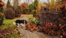 Novembrikuised aiatööd, millega talvele vastu minna.  Põhjaliku artikli koos näpunäidetega, kuidas puid ja põõsaid külma eest kaitsta, kuidas taimede juured soojas hoida ning millega peletada metsloomade isu viljapuude koorte ja okste vastu. Samuti kuidas lindude söögilauda rikastada ja mida saab ära teha soovimatu jää ja lume vastu leiab www.nipimeister.ee lehelt.