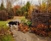 Novembrikuised aiatööd, millega talvele vastu minna.  Põhjaliku artikli koos näpunäidetega,...