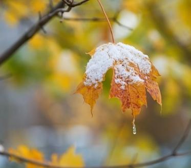 Ilma ülevaade 28.11.18 – 4.12.2018. Peatse talvekuu saabumine annab endast  valide tuultega märku, mis muudavad tajutava õhutemperatuuri külmemaks.
