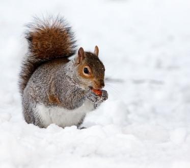 Ilma ülevaade 12.01.19 – 18.01.2019. Ilus pehme, valge talv jätkub. Nädalavahetus ja uus nädal toob kõike mõõdukalt, just seda mida oleme talvelt oodanud.
