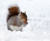Ilma ülevaade 12.01.19 – 18.01.2019. Ilus pehme, valge talv jätkub. Nädalavahetus ja uus...