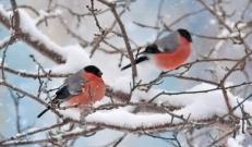 Ilma ülevaade 1.02.19 – 7.02.2019. Veebruarikuu algab lumesaju ja tuisuga. Pühapäevast asendub aga lumi vihma ja lörtsiga, sest temperatuurid on tõusnud plussi poolele.