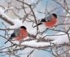 Ilma ülevaade 1.02.19 – 7.02.2019. Veebruarikuu algab lumesaju ja tuisuga. Pühapäevast...
