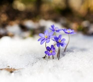 Ilma ülevaade 15.03.19 – 20.03.2019. Nädala pärast, 20. märtsil, algab kevad ja tasapisi saabub ka kevadsoojus aga puhumas on ka kevadtuuled, mis on kohati küllaltki tugevad.