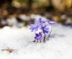 Ilma ülevaade 15.03.19 – 20.03.2019. Nädala pärast, 20. märtsil, algab kevad ja tasapisi...