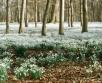 Ilma ülevaade 19.03.19 – 25.03.2019. Lähipäevad toovad kõikjale Eestis plusstemperatuurid....