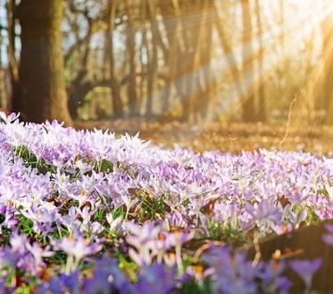 Ilma ülevaade 16.04- 22.04.2019. Lähipäevad jätkuvad ilusa kevadilma saatel. Suurel reedel saab viivuks ligi madalrõhkkond, pühapäevast valitseb kõrgrõhkkond edasi.