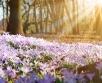 Ilma ülevaade 16.04- 22.04.2019. Lähipäevad jätkuvad ilusa kevadilma saatel. Suurel reedel...