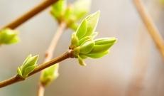 Ilma ülevaade 23.04- 28.04.2019. Kaunis kevad! Jätkub kõrgrõhkkonna ülekaal, nädala teisel poolel kerkivad temperatuuripügalad kuni 22 kraadini. Nädalavahetusel võib esineda vihmahooge ja äikest!