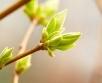 Ilma ülevaade 23.04- 28.04.2019. Kaunis kevad! Jätkub kõrgrõhkkonna ülekaal, nädala teisel...