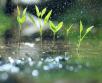 Ilma ülevaade 29.04-03.05.2019 Otsi välja vihmavari! Maikuu saabub koos madalrõhkkonna ja...