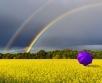 Ilma ülevaade 2.07.20 – 8.07.06.2020. Neljapäeval (2.07) jääb kogu Põhja-Euroopat katma...