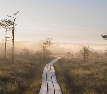 Ilma ülevaade 23.07– 29.07.07.2020. Neljapäeval (23.07) liigub madalrõhkkond Loode-Venemaalt üle Soome Bothnia lahele. Meie jääme selle lõunaserva. Öösel sajab kohati, päeval mitmel pool hoovihma, kohati on äikest..