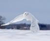 Ilma ülevaade 16.02.21 – 18.02.2021. Teisipäeval (16.02) liigub üle Karjala lõuna poole...