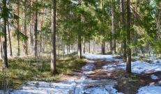Ilma ülevaade 12.03.21 – 18.03.2021. Tähelepanu! Homme on teeolud halvad! Väljastatud on alljärgnev hoiatus: 12.03 öö jooksul laieneb lumesadu üle Eesti ja tuiskab. Öö hakul tugevneb kagutuul sisemaal puhanguti 15, saartel ja rannikul kuni 21 m/s. Päeval lääne poolt alates läheb lumesadu ja tuisk üle lörtsiks ja vihmaks, õhutemperatuur tõuseb järk-järgult üle 0°C ja suureneb jäiteoht. Ööpäeva jooksul lisandub orienteeruvalt 5-10 cm lund ja lörtsi.