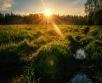 Ilma ülevaade 28.06.21 – 2.07.2021. Venemaa lääneosas pöörleb väike madalrõhkkond ja...